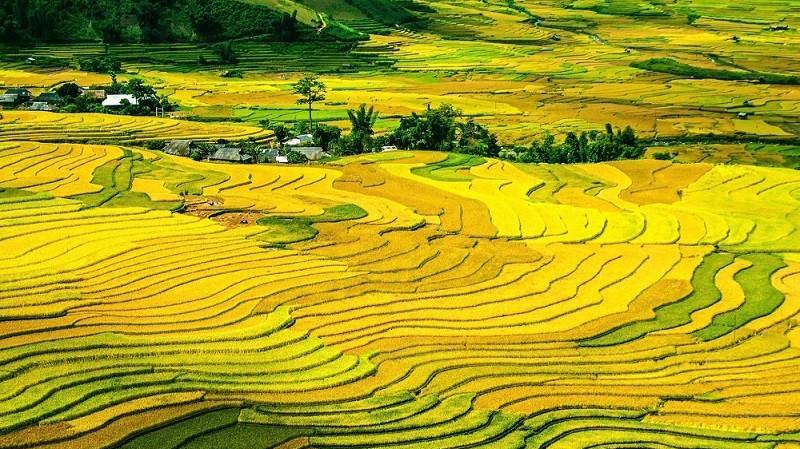 品种海啸、面积下降、收购价下调……2018中国稻米产业发展解析