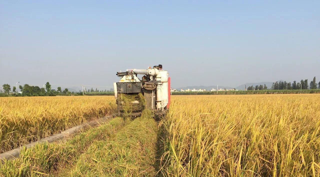 """""""机器代人""""在广东农村逐渐推开,这些合作社和农民都尝到了政策红利!"""