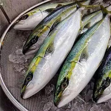世界上最贵的10条鱼!你见过几条?