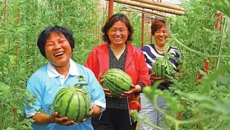 今年财政安排20亿,培育新型职业农民百万人以上