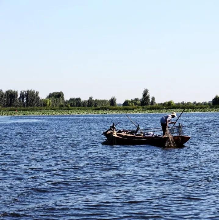 又有5万亩水面被禁养!雄安新区出重拳,白洋淀水产养殖两个月内全部清除