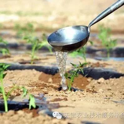 高温酷暑天,蔬菜该怎么管?