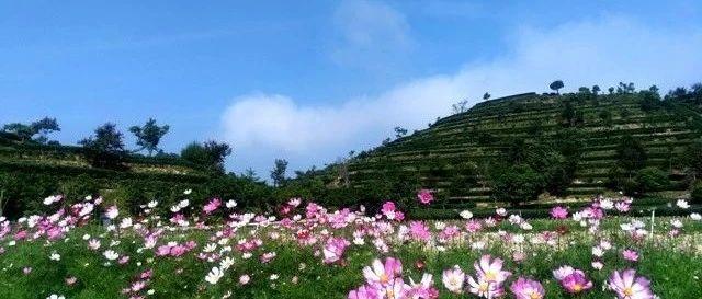 报名啦!广东省级休闲农业与乡村旅游示范点开始申报!(附申报条件)