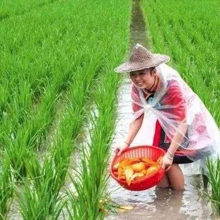 超2800万亩的稻田综合种养有了新要求!农业农村部将开展全面摸底调查,有问题一律整改