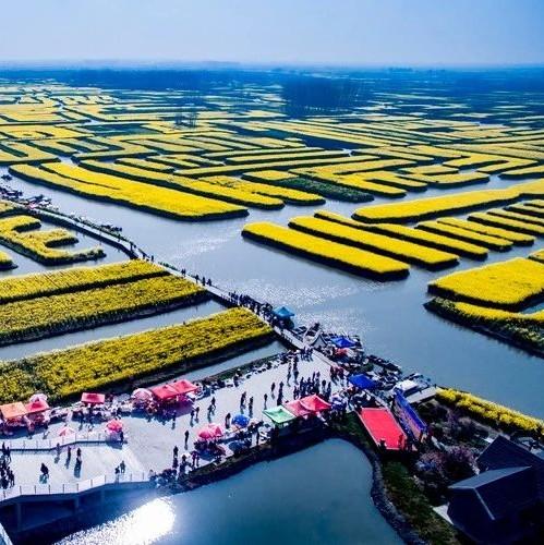 """第三批千亩以上种植大户名单公布,齐聚新疆丝路种业大会""""掘金""""!"""
