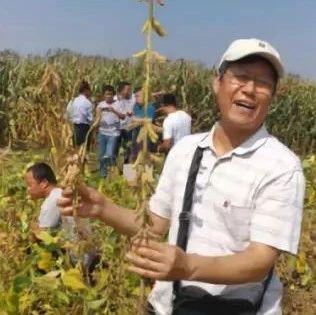 坚持不懈!用农民地里的这株变异大豆,他育成了高产品种——中作豆1号