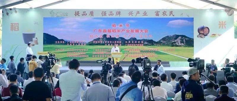 谋划推进广东稻米产业高质量发展!广东(云浮罗定)稻米节暨广东首届稻米产业大会召开