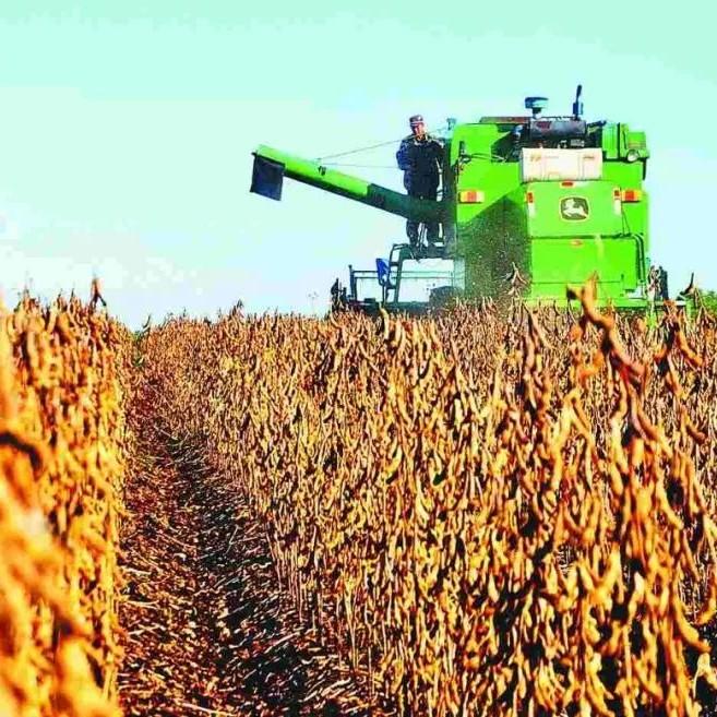 大豆产需缺口9000多万吨!农业农村部副部长韩俊:已周密准备应对,仅大豆种植今年增加超1000万亩