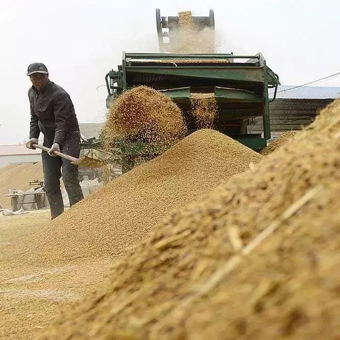 总产量2774亿斤!国家统计局公布2018年夏粮相关数据