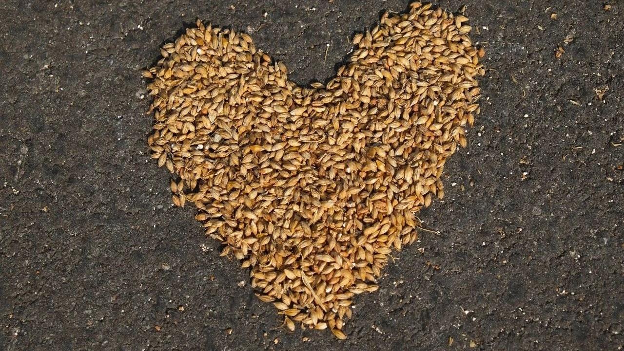 大比拼!8大水稻浸种催芽方法,你最中意哪个?