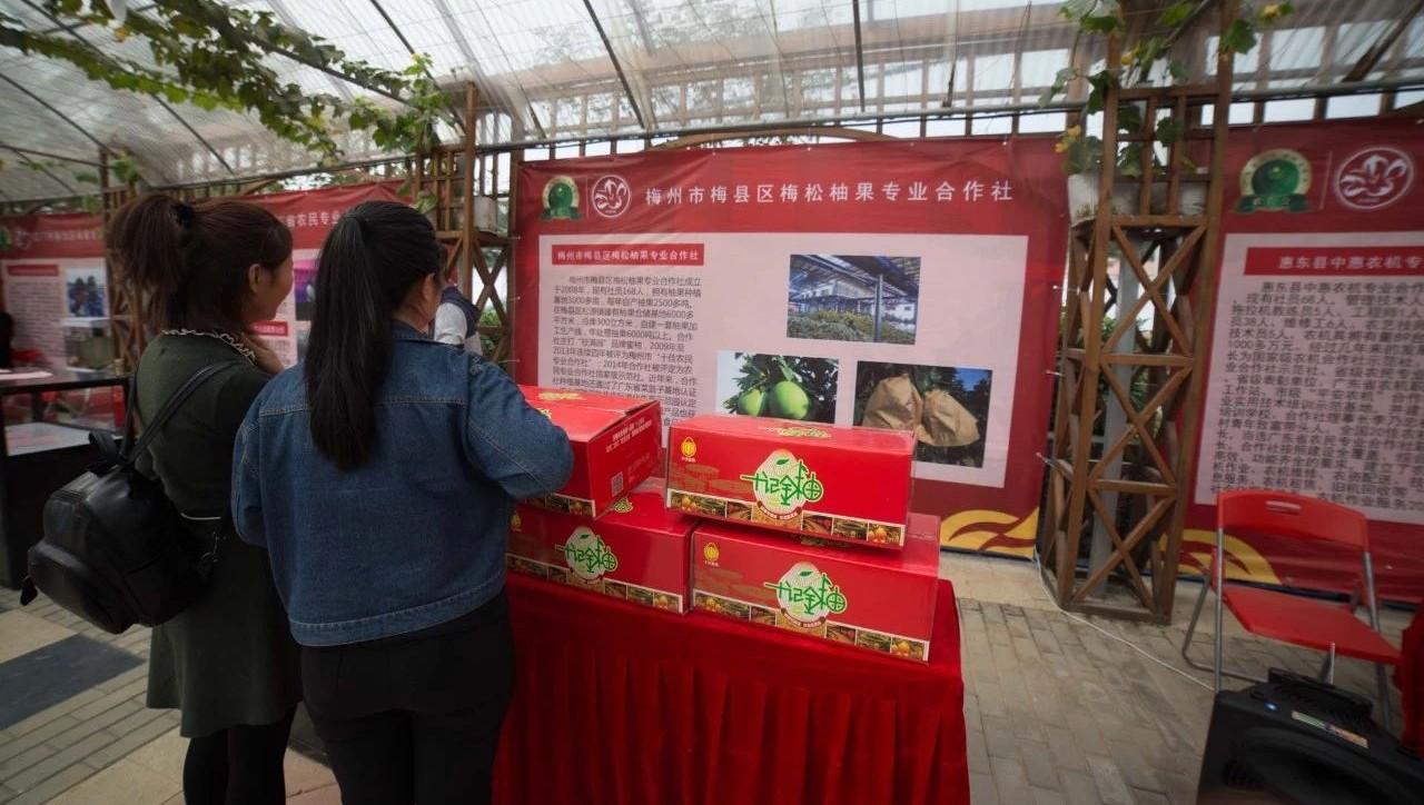 雄达实业、十记果业、中源农业入选广东省重点农业龙头企业(附入选企业名单)