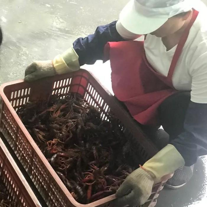 点赞!拣虾女工的日常:1人1天分拣1万只小龙虾!经常被夹,手指通红……