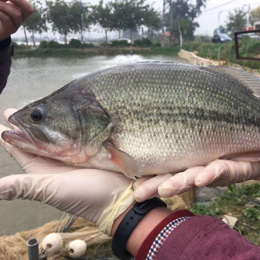 每周吃鱼达到这个量,脑卒中风险下降14%!越吃越聪明!注意,这几种鱼被点名……